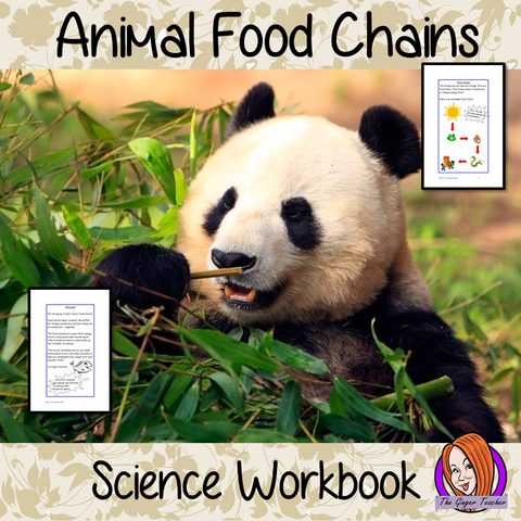 Science, Animals Including Humans, Food Chains - STEAM Workbook