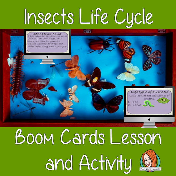 Insects Life Cycle - Boom Cards Digital Lesson