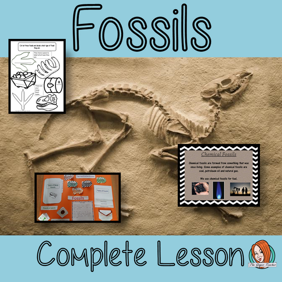 Understanding Fossils Complete Lesson