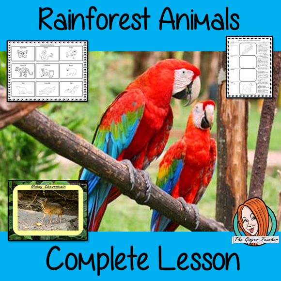Identifying Rainforest Animals  -  Complete Lesson