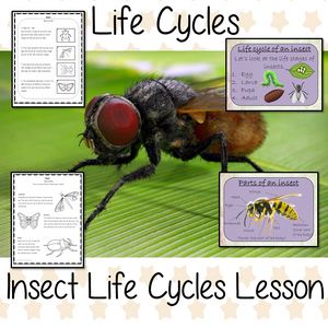 Insect Life Cycles Complete Science Lesson complete lesson on the life cycles of insects Teach kids about the insect stages of life. This resource is a complete classroom lesson on the stages of insects life cycle, how they are classified, the different types of insects and discuss the exoskeleton There is a PowerPoint and printable student activities included to assist learning and encourage ideas in children and teachers #insectlifecycles #lifecycles #insects