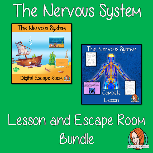 nervous-system-classroom-activities