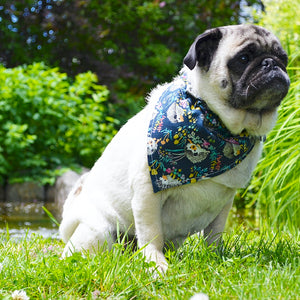 Lens And Leash Bandanas