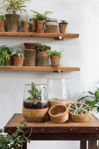 Set of glass terrariums with wooden base on table and assorted terracotta pots with plants in background.
