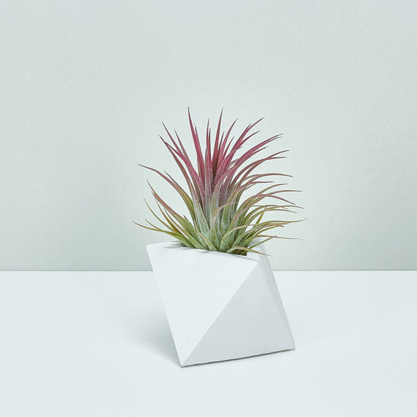 TRIANGLE PLANTER WHITE - Large