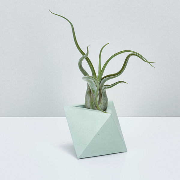 TRIANGLE PLANTER MINT - Large