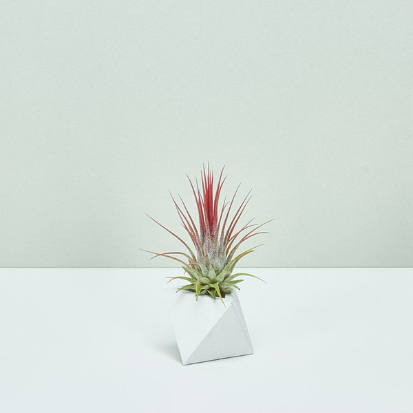 TRIANGLE Planter White - Small