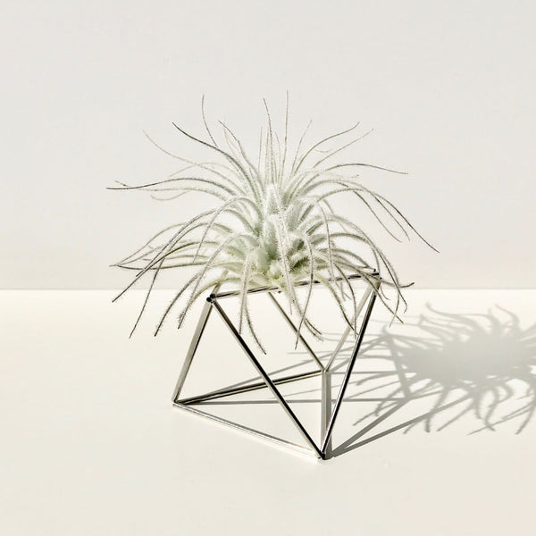 Table Himmeli Cube Silver + Tillandsia Tectorum