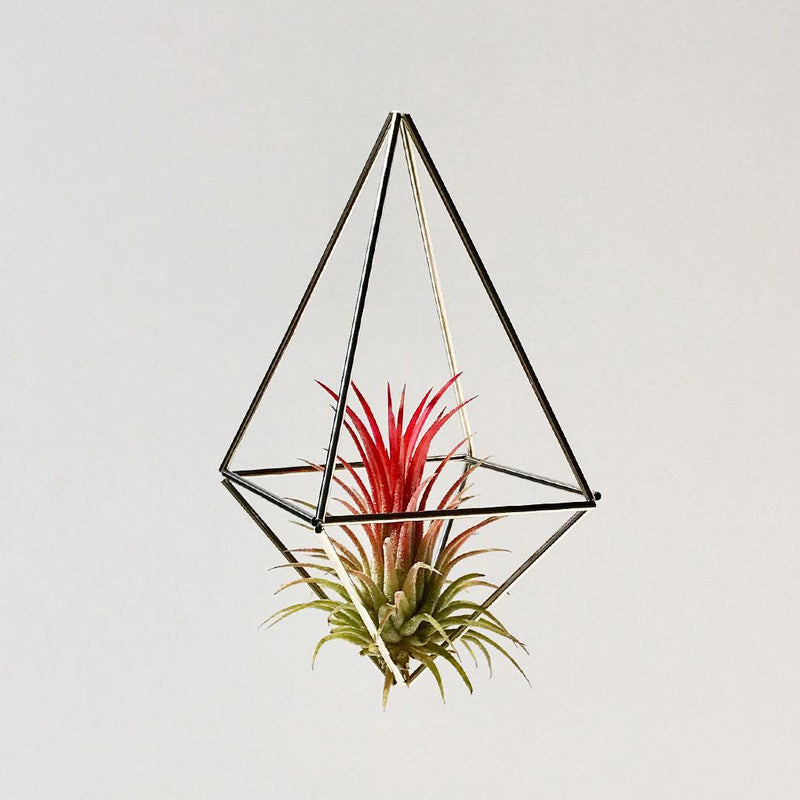 Ionantha Red + Aufhängung Himmeli Drop Silver (Small)