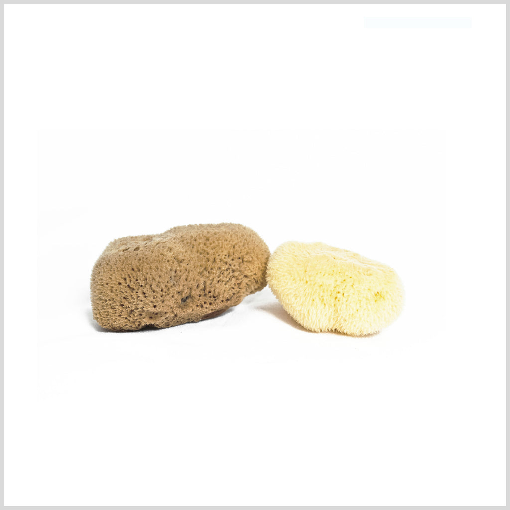 Fine Silk Mini Sea Sponge