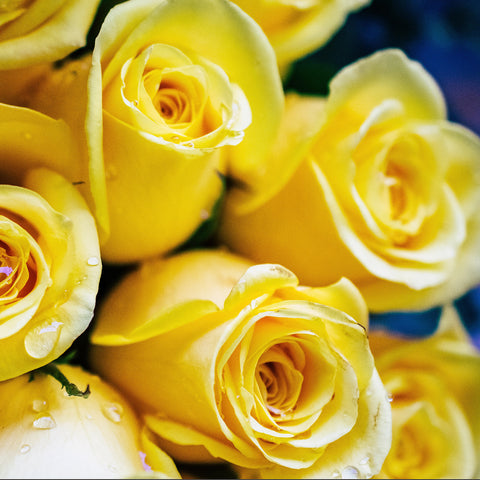 "alt=""a bundle of yellow roses"""