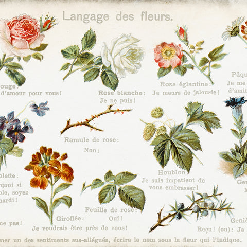 "alt=""Language of Flowers chart"""