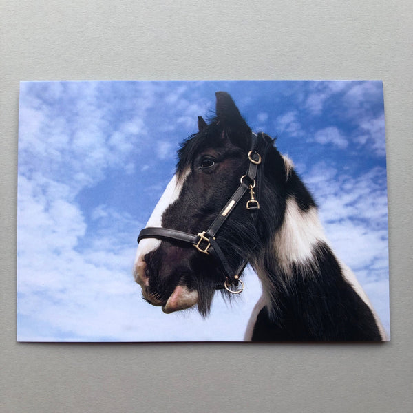 """A Gift Horse"" Greeting Card"