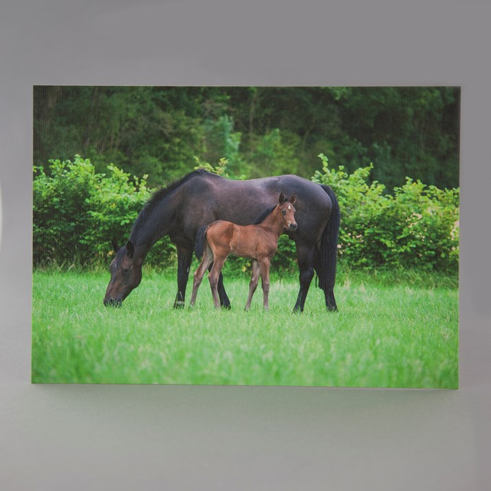 'Mum You're the Best' Mare & Foal Card