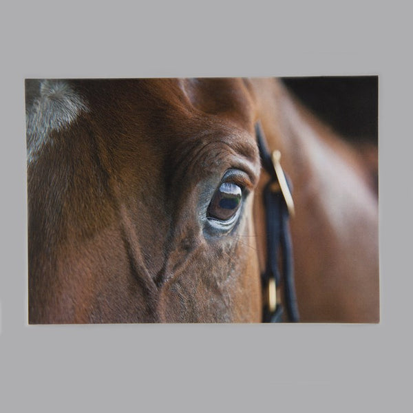 'A Kind Eye' Horse Greeting Card