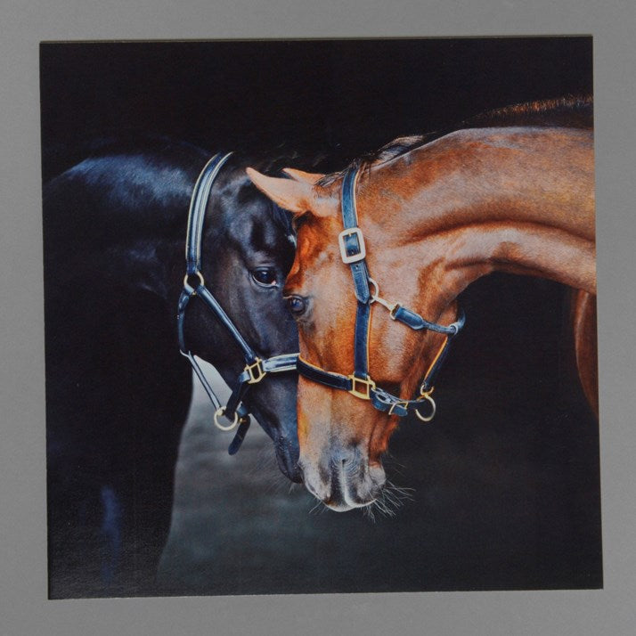 Old Friends Greeting Card black background wtih a black and brown horse rubbing noses