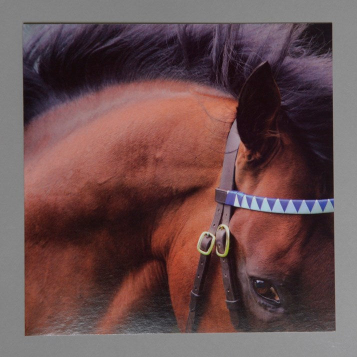 Dubawi Stallion Greeting Card