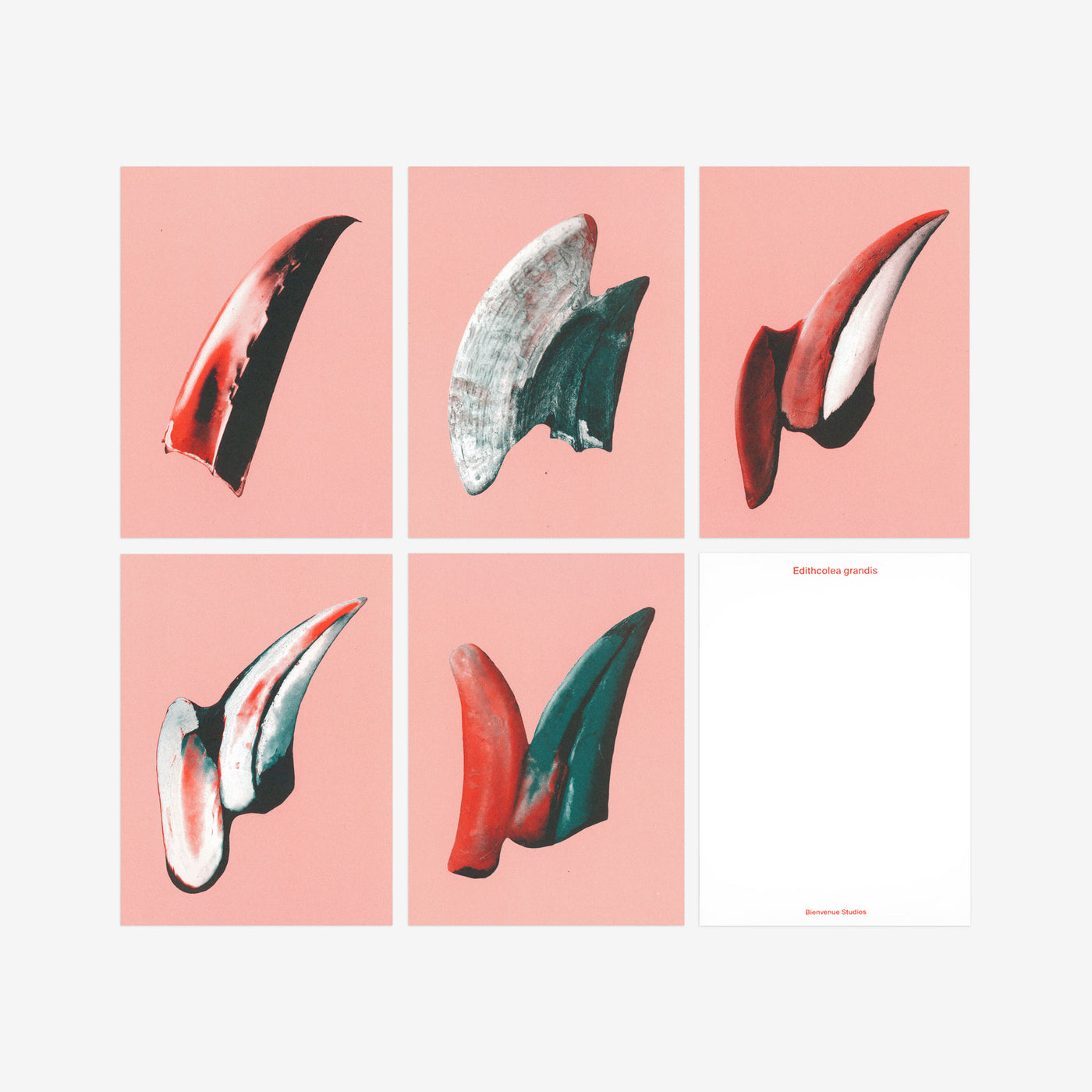 BIENVENUE STUDIOS 〈SMALL PRINT COLLECTION_GENTLE KNIFE〉(5PCS)