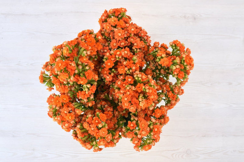 Warm Orange Kalanchoe