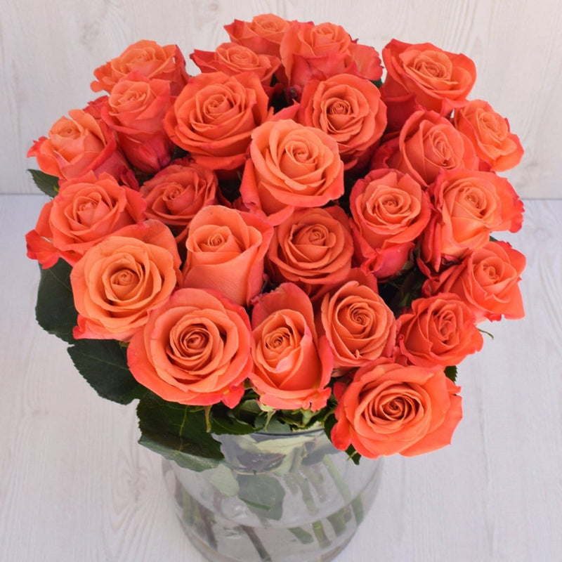 Orange Crush Rose 25ST