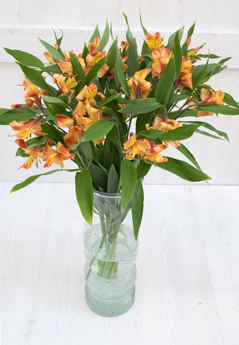 Orange Alstroemeria