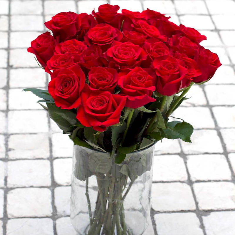 Red Rose 25ST
