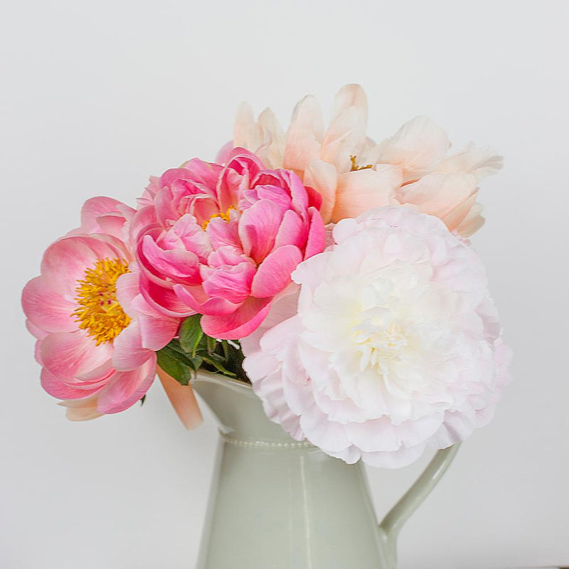 Assorted USA Peonies