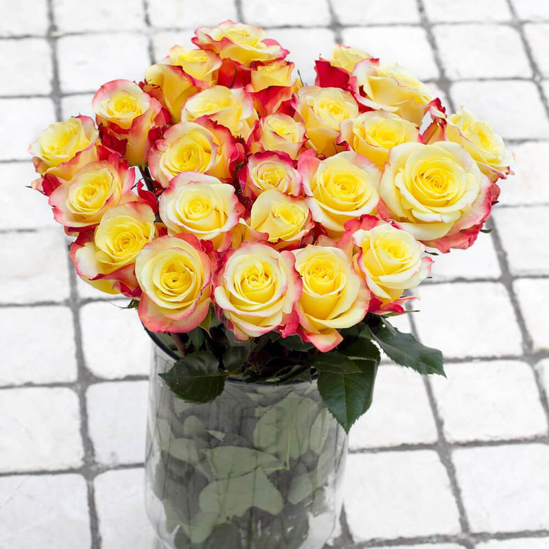 Hot Merengue Roses