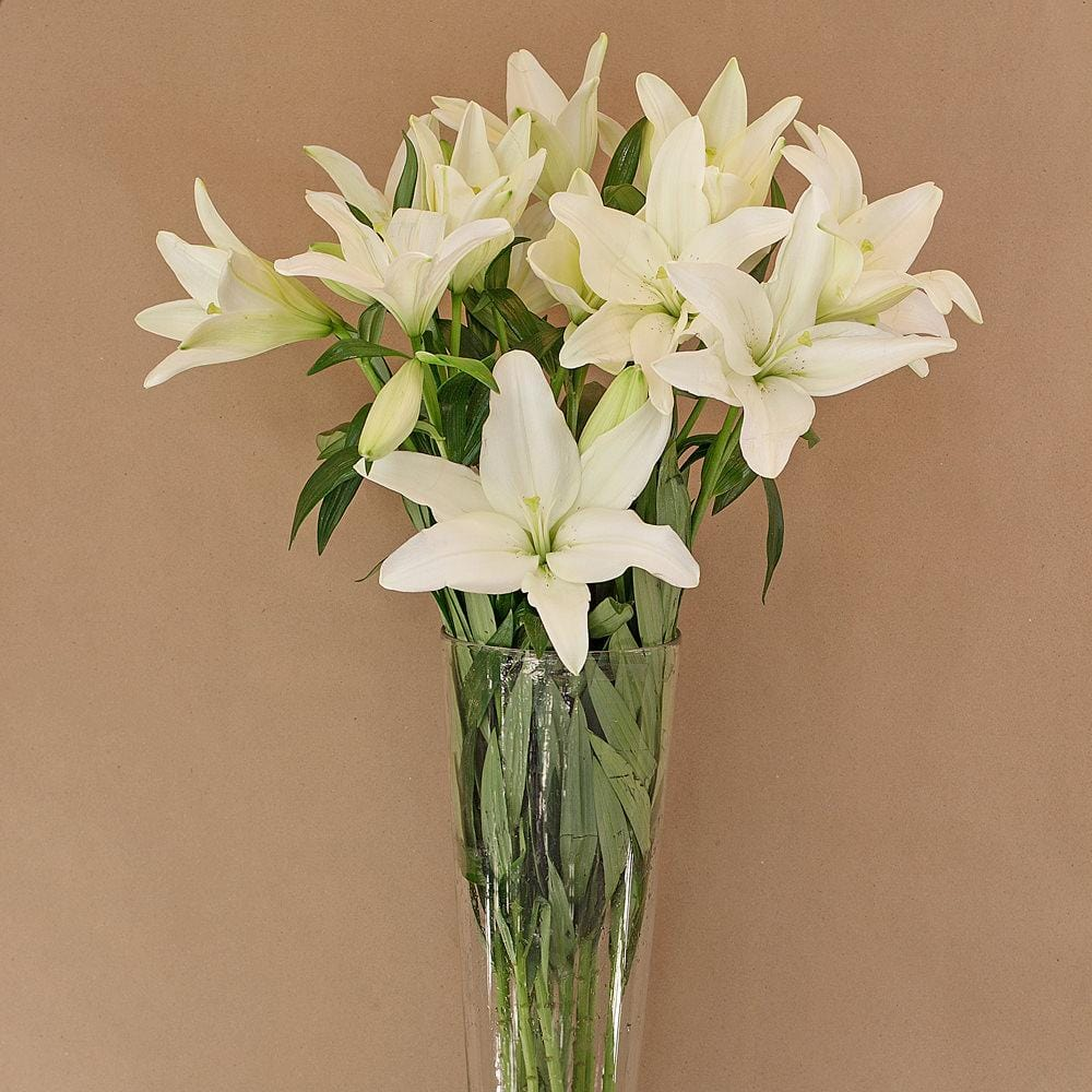 White LA Lillies