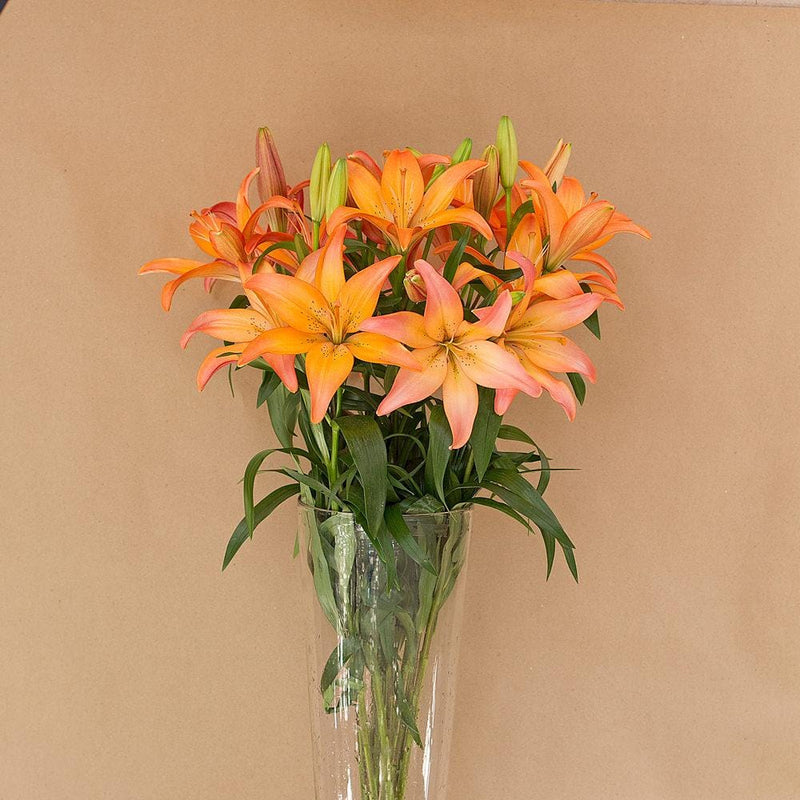Orange LA Lillies