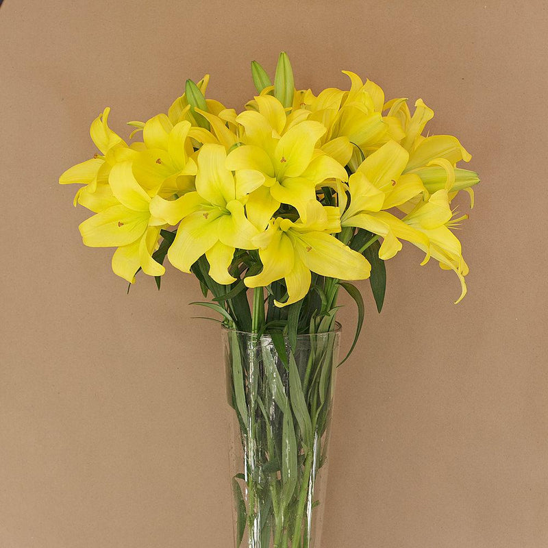 Yellow LA Lillies