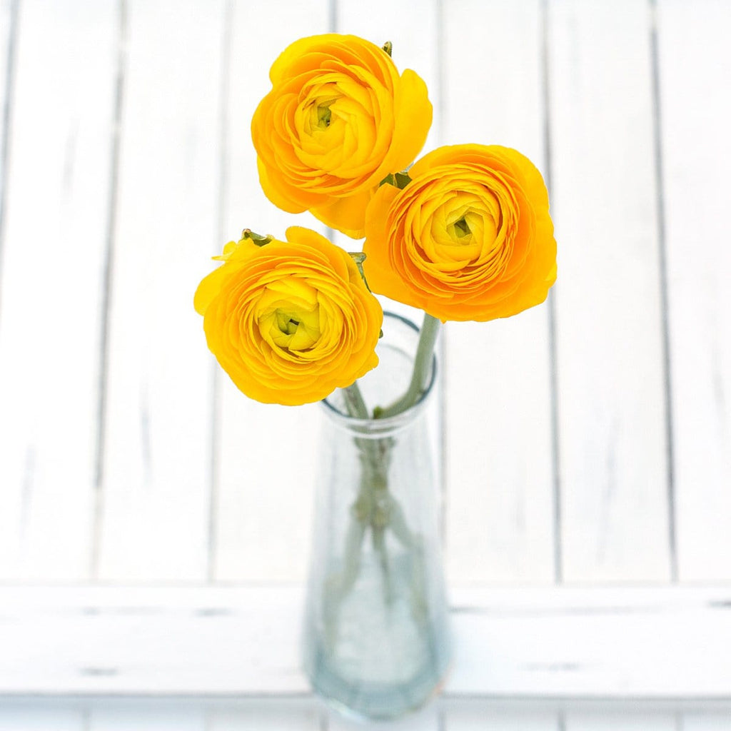 Fall Yellow Ranunculus