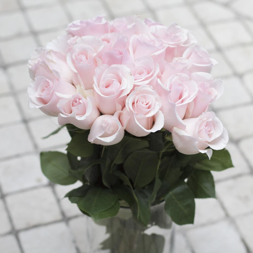 Light Pink Rose 25ST