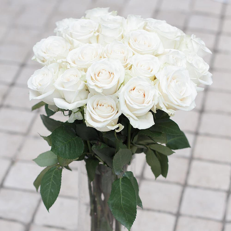 White Rose 25ST