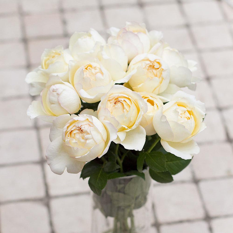 Classic Woman garden roses