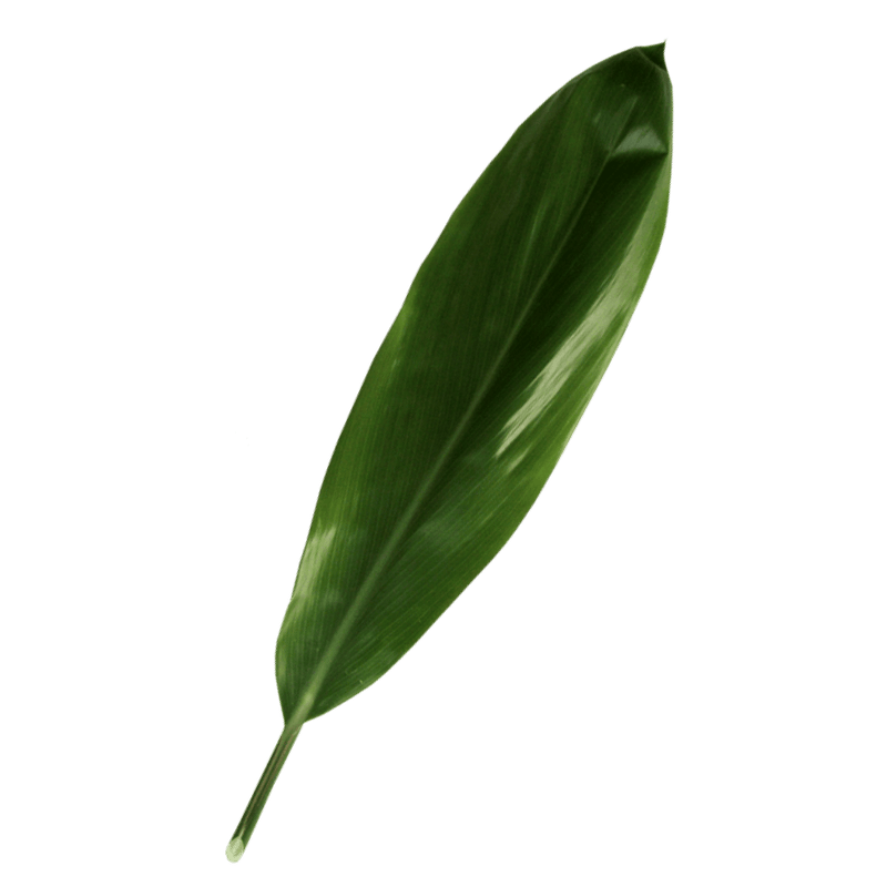 Green TI Leaf