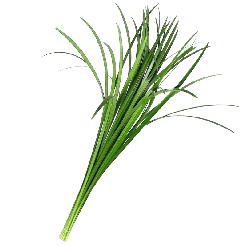 Lily Grass Green Filler