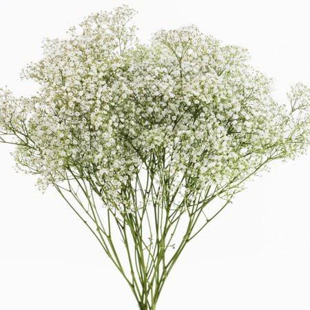 Million Star Gypsophila, Solidago and Veronicas Mix Box