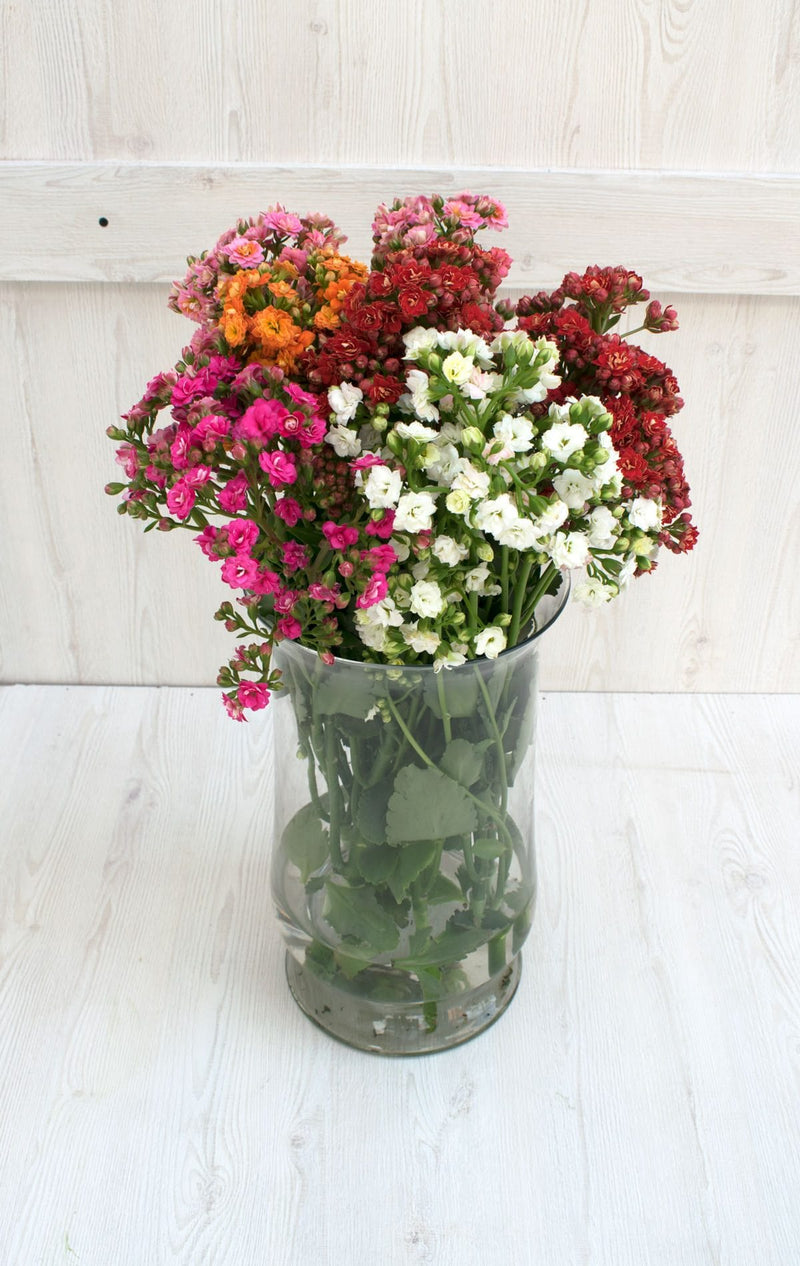 Assorted Kalanchoe