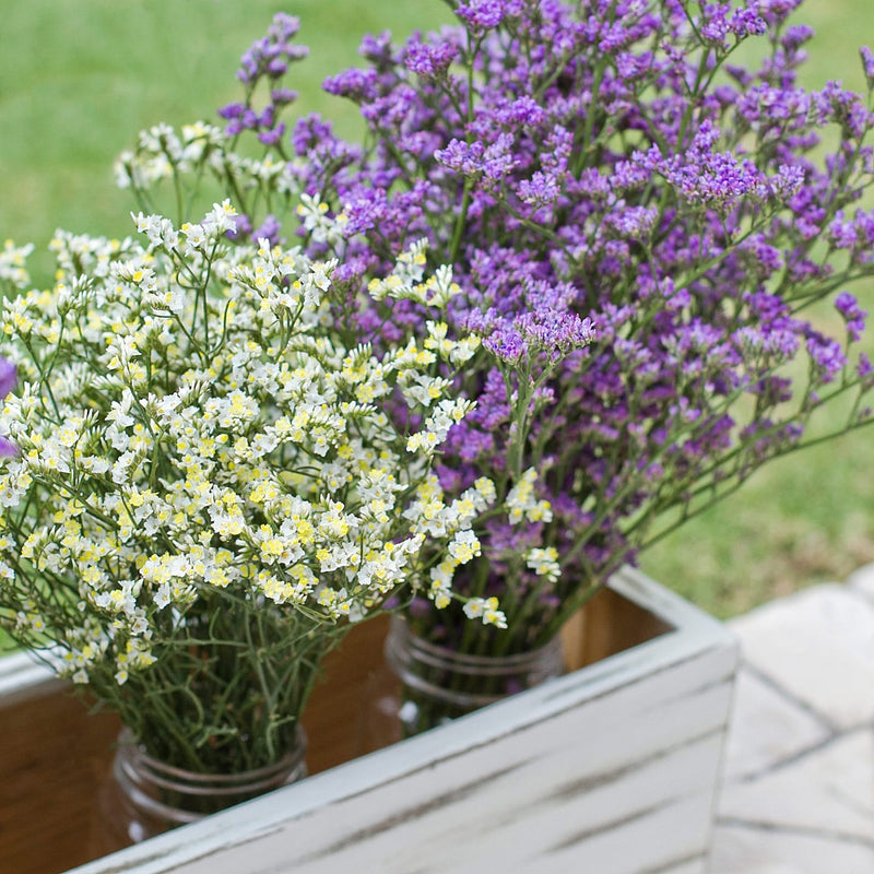Limonium, Ranunculus and Craspedia Mix Box