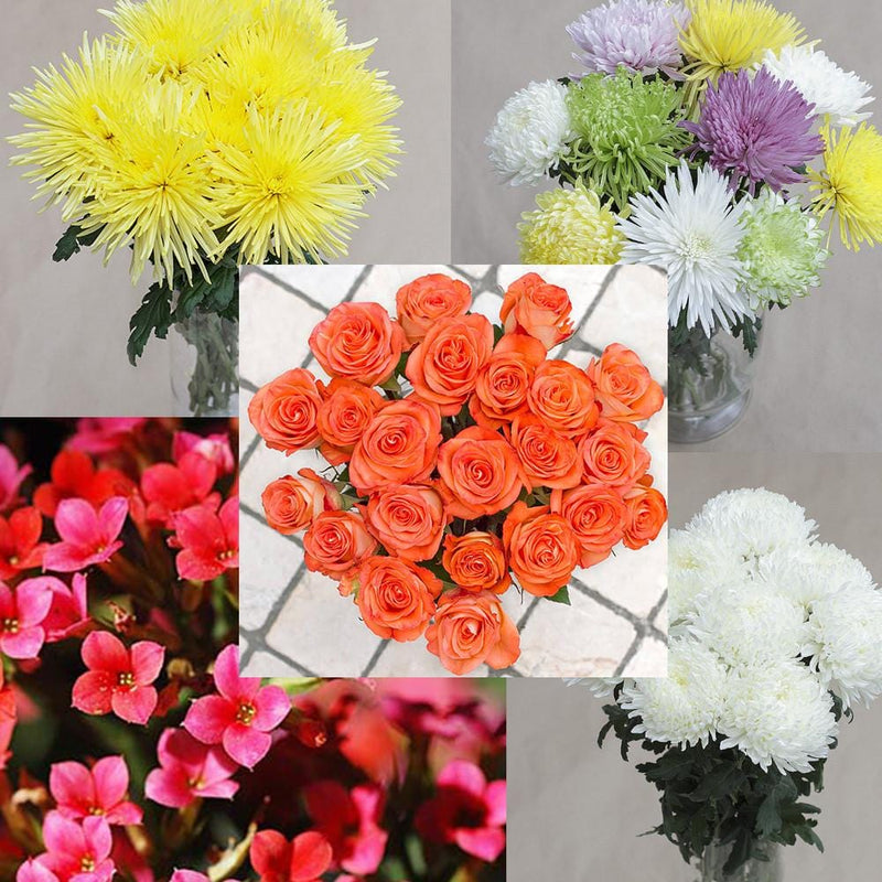 Premium Roses, Anastasia Mums, Cremon Mums, Football Mums and Kalanchoe Mix Box