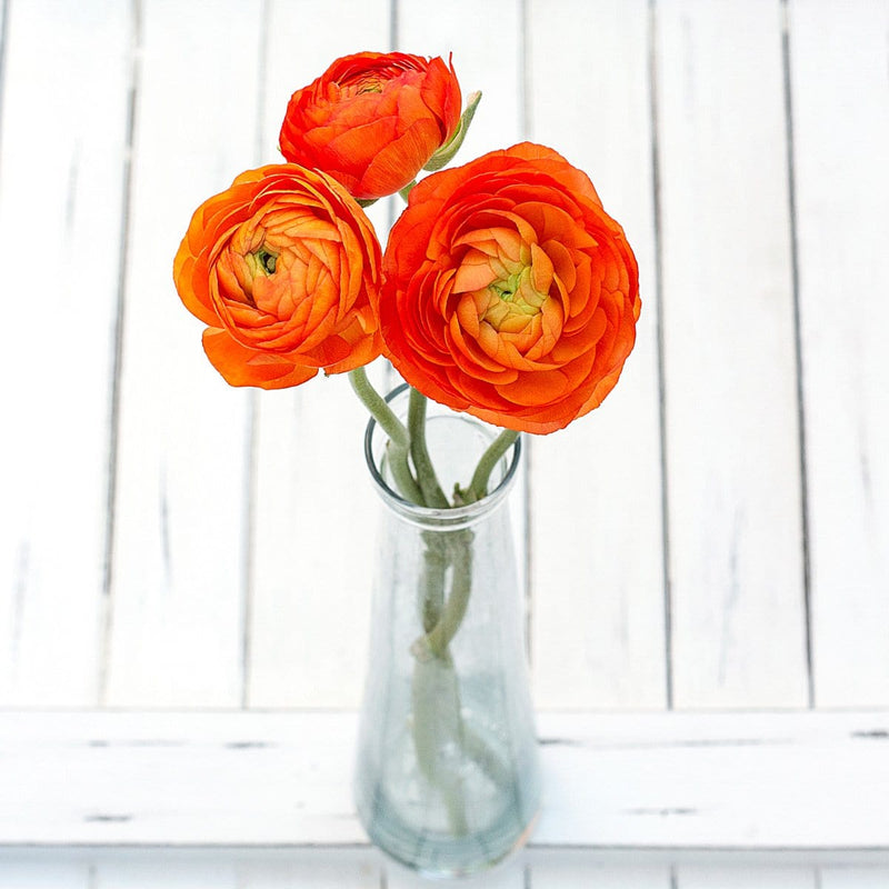 Fall Orange Ranunculus