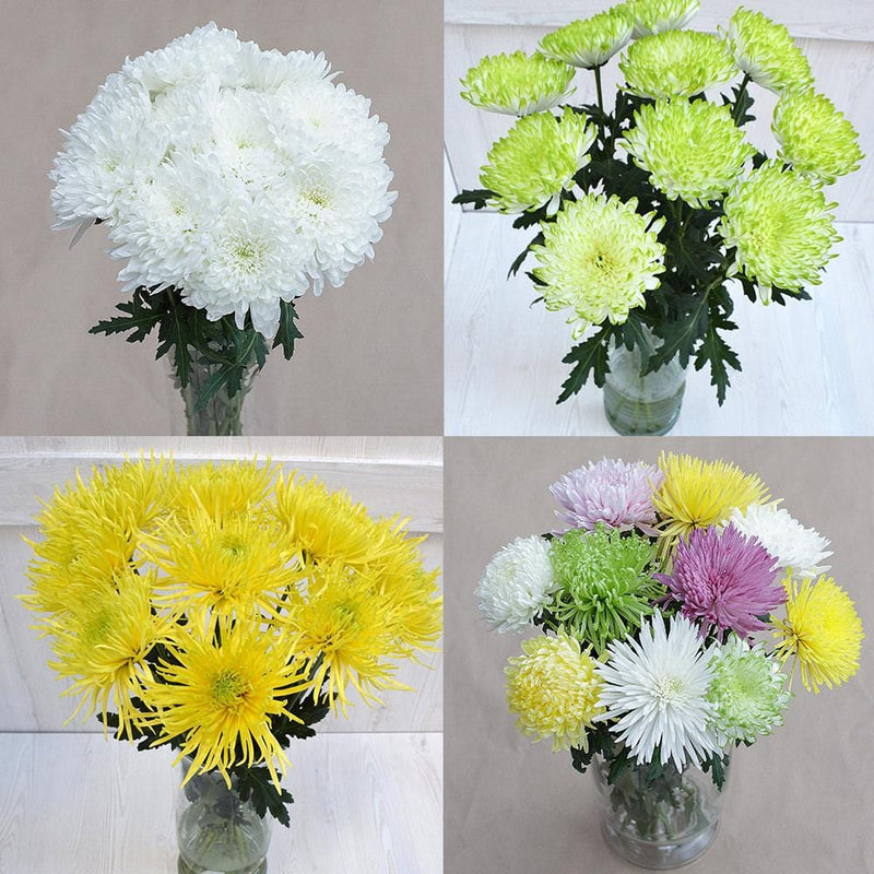 Premium Roses, Spider Mums, Cremon Mums, Football Mums and Disbud Ball Mix Box