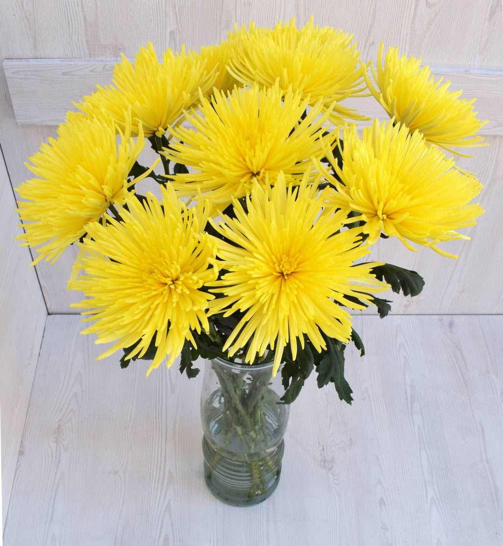 Fall Yellow Anastasia Mums