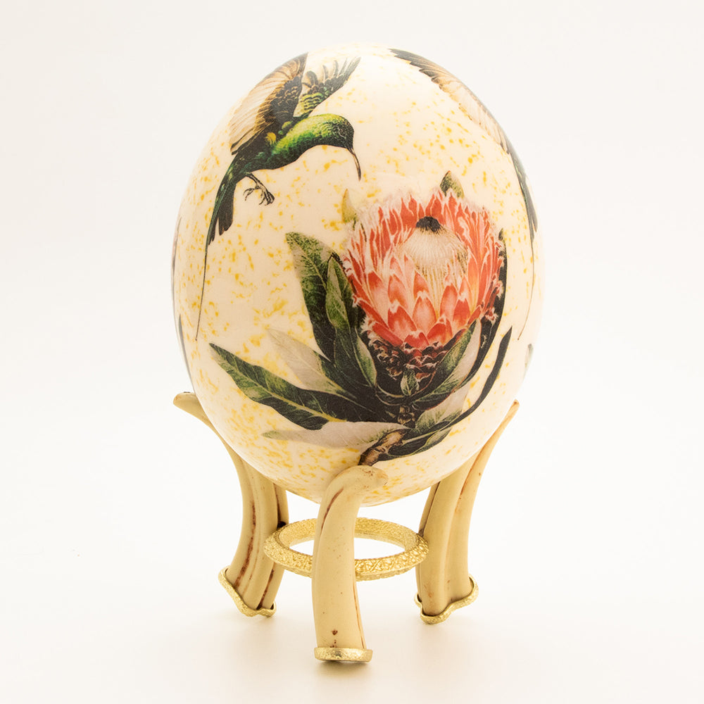 Protea Flower & Sunbird Egg with stand