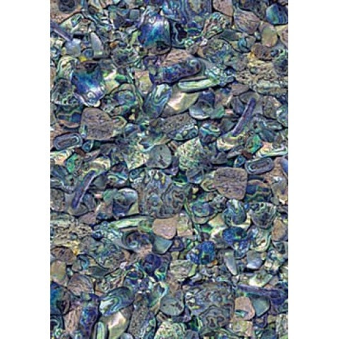 Paua Pieces