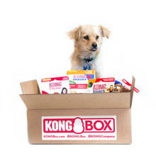 KONG Box - Small
