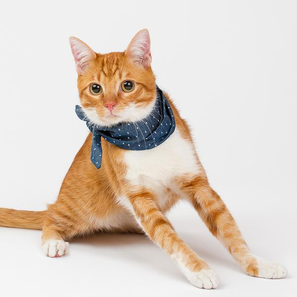 Denim Polkadot Pet Necktie