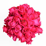 Hot Pink Best Roses