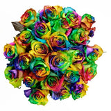 Tinted Rainbow Best Roses